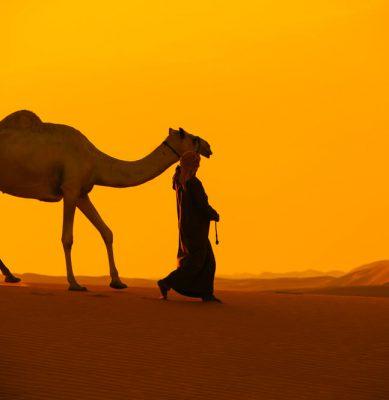 الصحراء 9