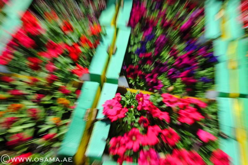5 نصائح لتجنب اهتزاز الصورة Blur